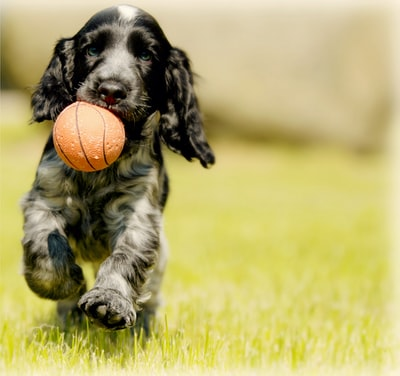 What you need to know about pet boarding in Texas