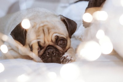 How to find the cheapest pet insurance policy on pet insurance